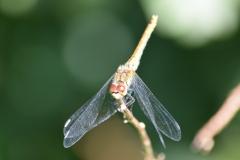 Macroaufnahmen/ Insekten